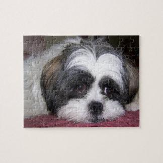 Quebra-cabeça Cão de Shih Tzu