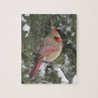 Quebra-cabeça Cardinal