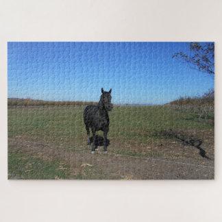 Quebra-cabeça Cavalo preto apenas no pasto