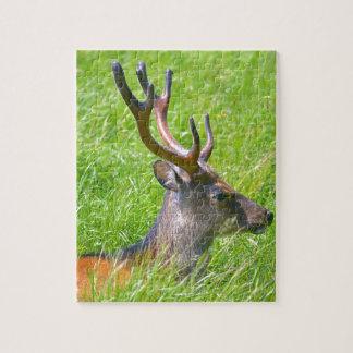 Quebra-cabeça Cervos de fallow do fanfarrão na grama