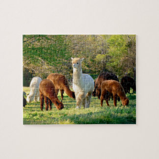 Quebra-cabeça da alpaca com caixa de presente