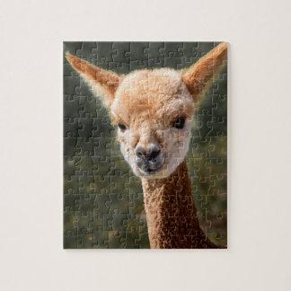 Quebra-cabeça da alpaca do bebê