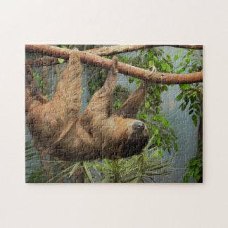 Quebra-cabeça da foto da preguiça