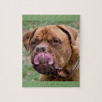 Quebra-cabeça da foto de Dogue de Bordéus 8x10