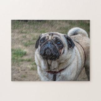 Quebra-cabeça da foto do cão do Pug