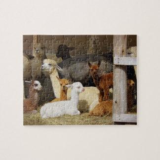 Quebra-cabeça da foto do celeiro da alpaca