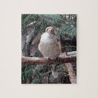 Quebra-cabeça de Kookaburra