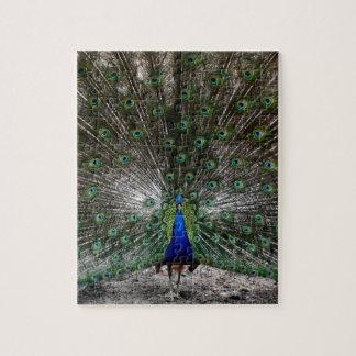 Quebra-cabeça difícil das penas do pavão dos