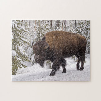Quebra-cabeça do bisonte americano (bisonte do bis
