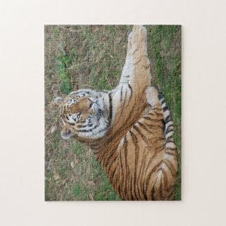 Quebra-cabeça do tigre
