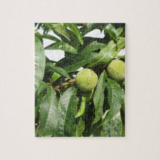 Quebra-cabeça Dois pêssegos verdes unripe que penduram em uma