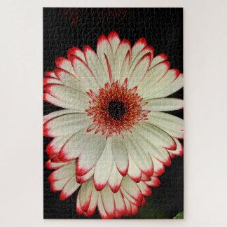Quebra-cabeça Duas flores brancas da margarida do Gerbera no