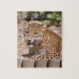 Quebra-cabeça Encontro do leopardo