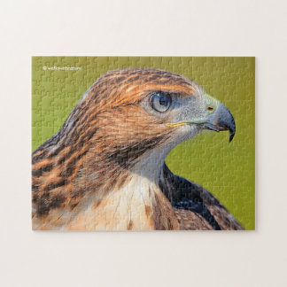 Quebra-cabeça Falcão Vermelho-Atado juvenil