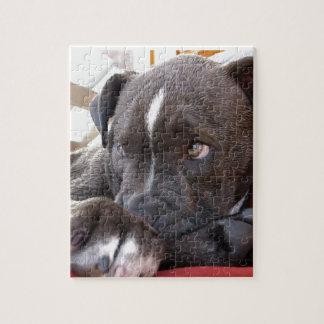Quebra-cabeça Filhotes de cachorro de Pitbull do bebê