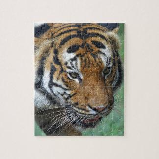 Quebra-cabeça Fim-acima do tigre do Malay dos alugueres