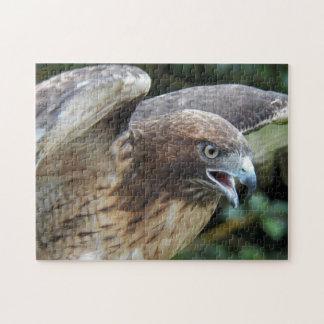 Quebra-cabeça foto Vermelho-atada do falcão