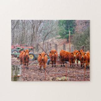 Quebra-cabeça Fotos de vitelas de Minnesota