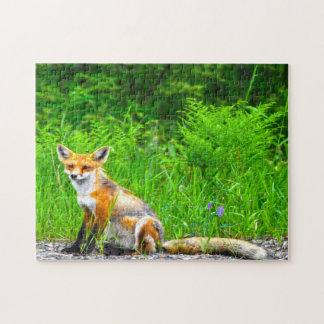 Quebra-cabeça Fox canadense