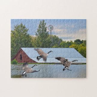 Quebra-cabeça Gansos de Canadá que aterram na lagoa
