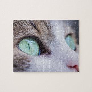 Quebra-cabeça Gato de tigre cinzento com olhos verde-claro