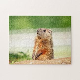 Quebra-cabeça Groundhog novo