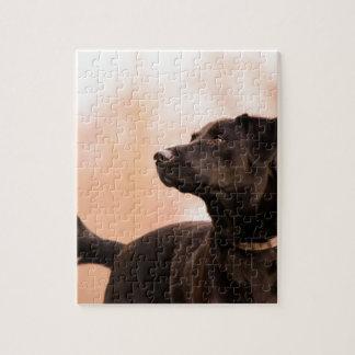 Quebra-cabeça Labrador