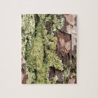 Quebra-cabeça Latido de pinheiro da costa leste molhado da chuva