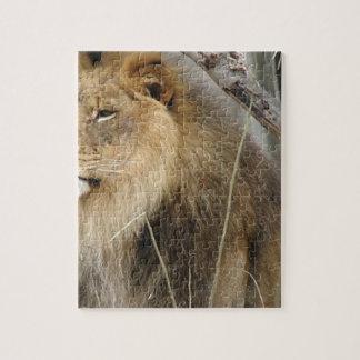 Quebra-cabeça Leão estóico que olha fora na distância