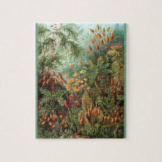 Quebra-cabeça Muscinae - Ernst Haeckel 8x10