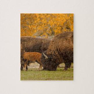 Quebra-cabeça Nação da família do bisonte