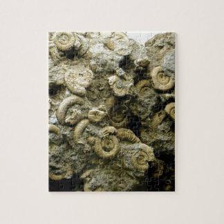 Quebra-cabeça o fóssil descasca a arte