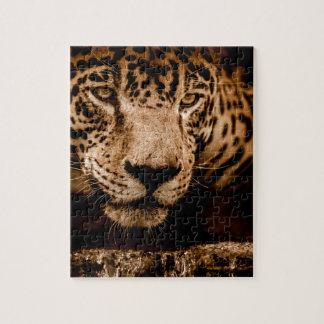 Quebra-cabeça olhos de desengaço da água do jaguar