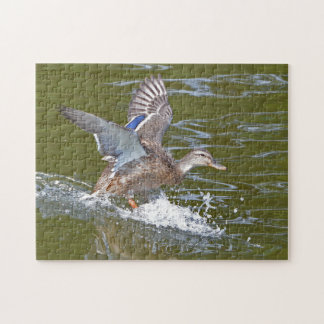 Quebra-cabeça Pato selvagem fêmea que entra para aterrar