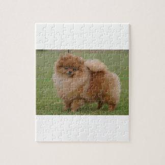 Quebra-cabeça Perfeição de Pomeranian,