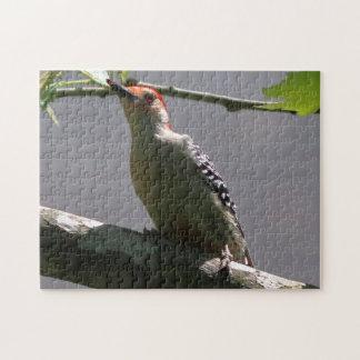 Quebra-cabeça pica-pau Vermelho-inchado, enigma da foto