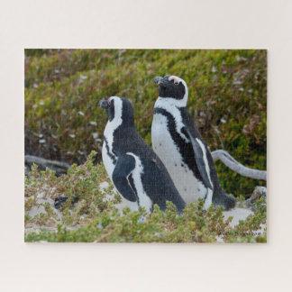 Quebra-cabeça Pinguins brincalhão