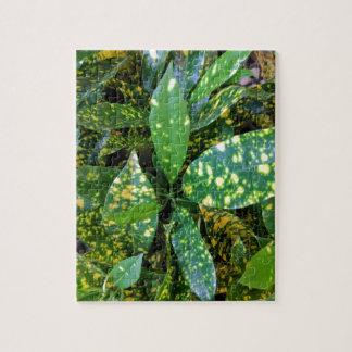 Quebra-cabeça Planta do Croton