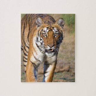 Quebra-cabeça Rapina de desengaço do Tigress fêmea