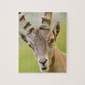 Quebra-cabeça Retrato de um íbex