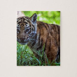 Quebra-cabeça Tigre Cub de Sumatran dos alugueres