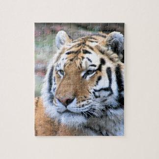 Quebra-cabeça Tigre de Bengal real estóico dos alugueres