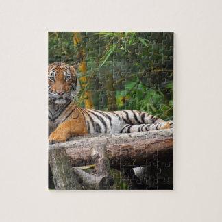 Quebra-cabeça Tigre do Malay dos alugueres que Lounging no