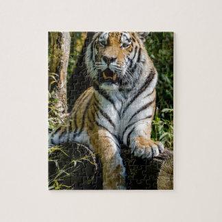 Quebra-cabeça Tigre dos alugueres em Muenster