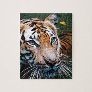 Quebra-cabeça Tigre dos alugueres na água