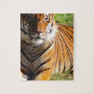 Quebra-cabeça Tigre Malayan dos alugueres