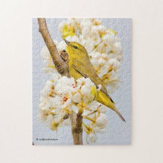 Quebra-cabeça Toutinegra Alaranjado-Coroada entre as flores de