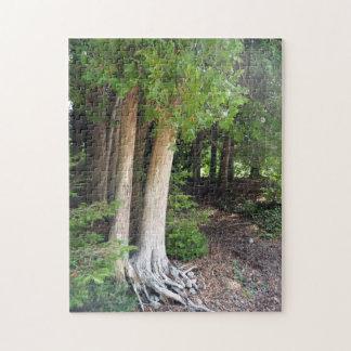 Quebra-cabeça Trajeto de floresta 586