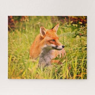 Quebra-cabeça Vixen bonito - Fox vermelho na floresta escocesa