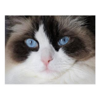 Querido Eyed azul do gato do gatinho Cartão Postal